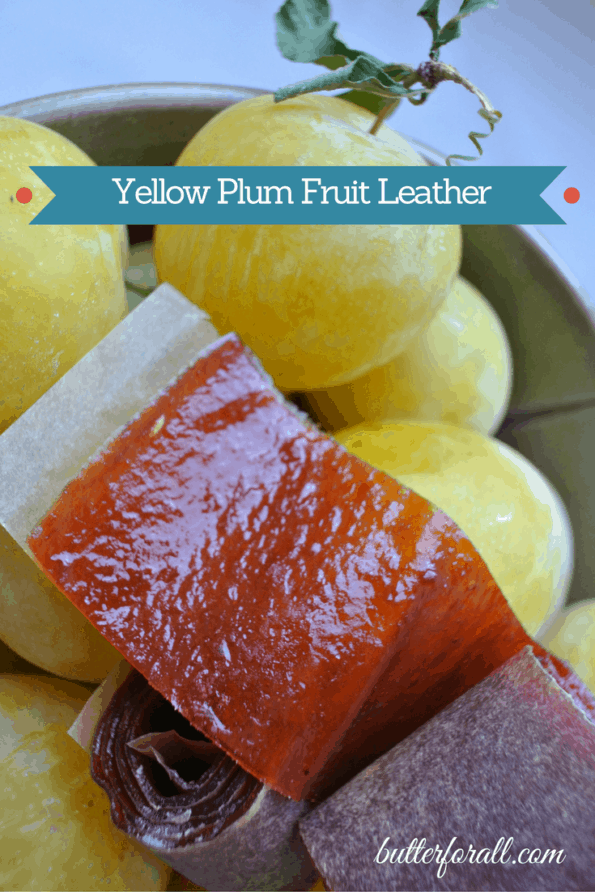 Yellow plums with a strip of freshly made fruit leather.