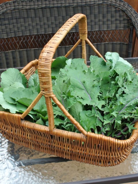 A basket of kale from the garden.