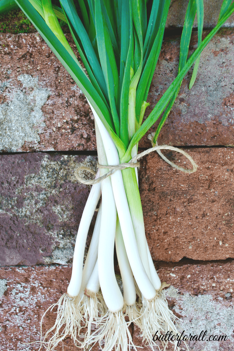 Harvesting And Using Green Spring Garlic From Garden To Table