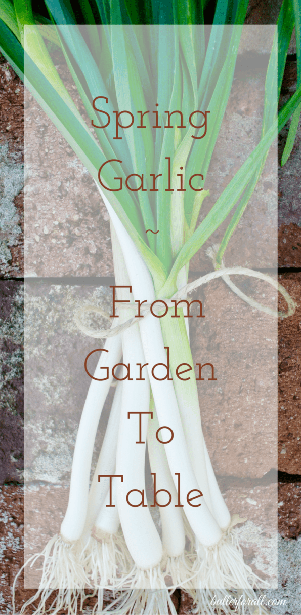 A bunch of spring garlic with text overlay.