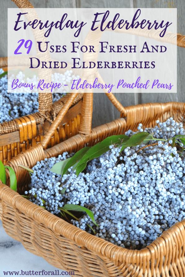 Baskets full of ripe elderberries.