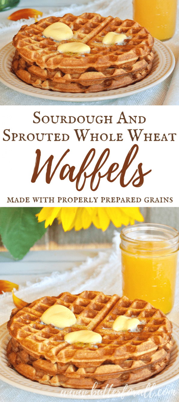 You will love this easy recipe for Sourdough And Sprouted Whole Wheat Waffles that used properly prepared grains and comes together in minutes!