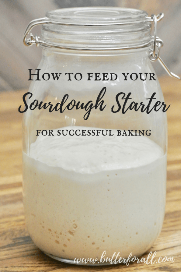 The key to really great sourdough bread and other baked goods is a lively and active sourdough starter. Learn how to properly feed your starter for the most successful bread baking. #fermented #naturallyleavened #masamadre #motherdough #sourdough #leaven #slowfood #realfood #nourishingtraditions #wisetraditions