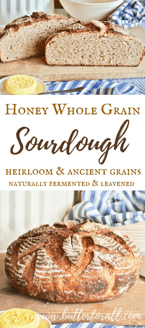 Learn how to make a whole grain sourdough boule sweetened with just a tad of honey. This bread is traditionally fermented and leavened resulting in a perfectly balanced flavor and better digestion. This recipe uses whole wheat, heirloom and ancient grains for a delightful flavor and texture! #realfood #realbread #sourdough #wisetraditions #nourishingtraditions #masamadre #motherdough #starter