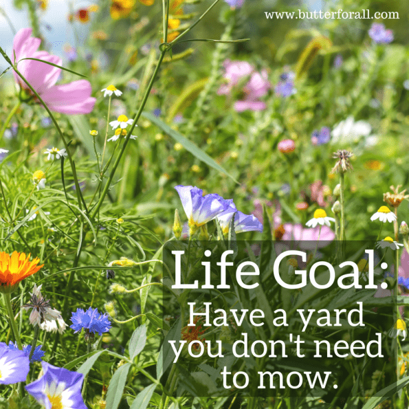 Living wild! #homesteading #wildflowers #garden #meme #butterforall
