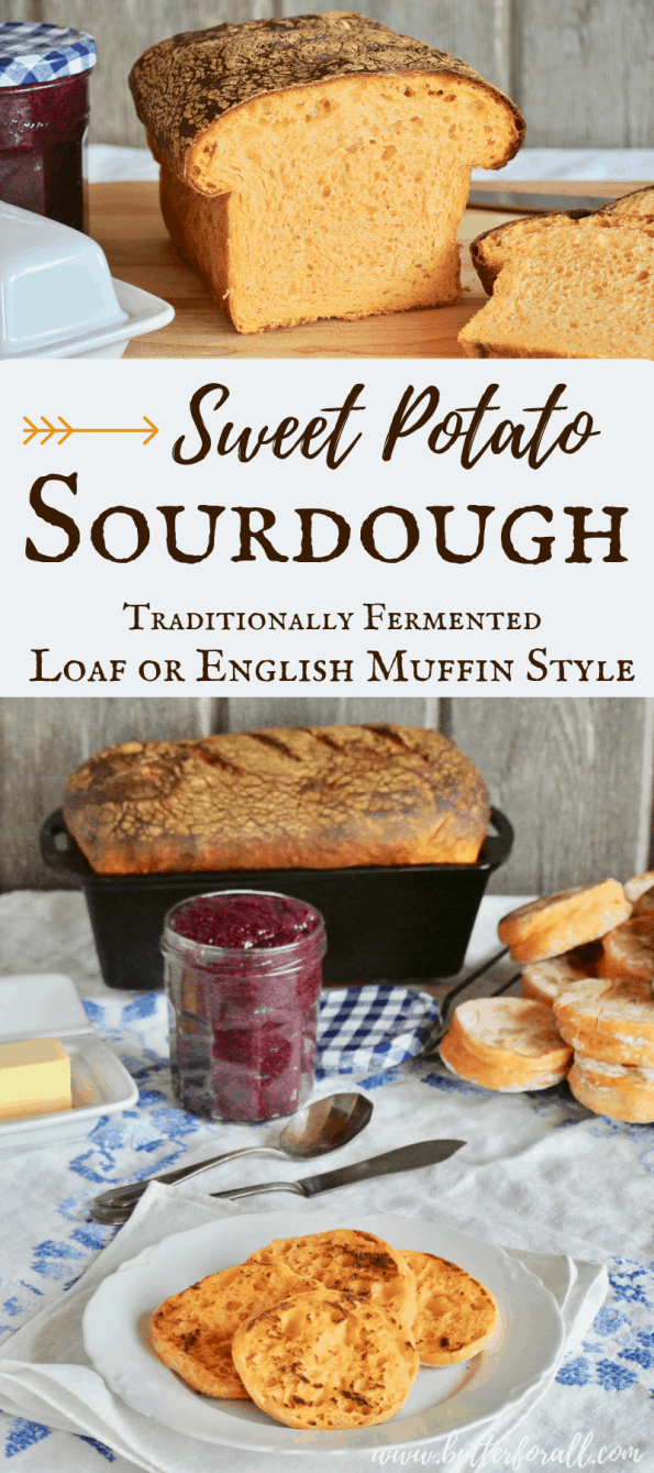 A real Sweet Potato Sourdough Bread that uses traditional fermentation to achieve the perfect balance of flavor and better digestibility. This generous recipe makes plenty of English Muffins, 2 Soft Sandwich Loaves or some of each! #starter #sourdough #fermentation #bread #potato #resistantstartch #complexcarbs #nourishingfood #wisetraditions #nourishingtraditions #realfood #muffins #eggs #breakfast #frenchtoast