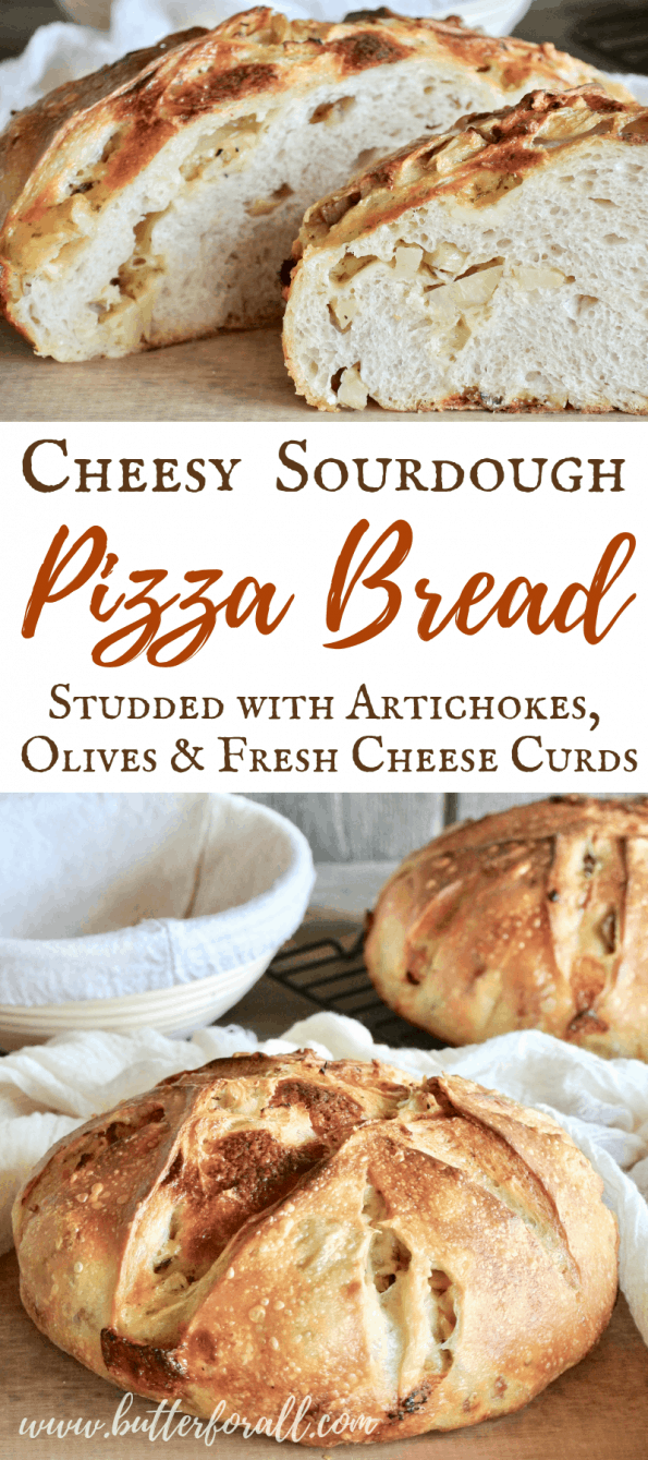 This Cheesy Sourdough Pizza Bread takes pizza bread to a new level. Studded with favorite toppings like artichoke hearts, glarlic stufffed green olives and fresh cheese curds makes every bite a delight. Not to mention the dough undergoes a long fermentation making it extra east to digest! #realfood #pizza #sourdough #Cheese #nourishingtraditions #wisetraditions #starter #bread