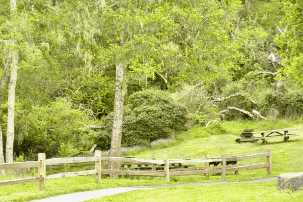 A lush and green picnic area at Tomales Bay State Park.